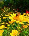 Abelha coletando pólen nas flores.jpg