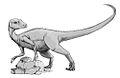 Abrictosaurus BnW.jpg