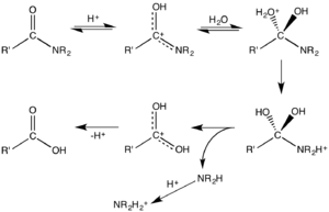 Hydrolysis - Mechanism for acid-catalyzed hydrolysis of an amide.