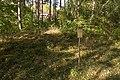 Adelsö 51 1 September 2013.jpg