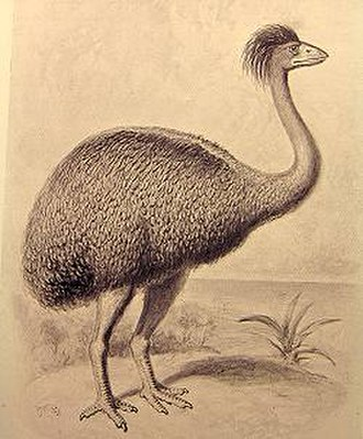 Elephant bird - Restoration of Aepyornis maximus