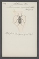 Aethomerus - Print - Iconographia Zoologica - Special Collections University of Amsterdam - UBAINV0274 034 23 0020.tif