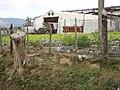 Agricultural Warehouse - Viñales - Cuba (5289104103).jpg