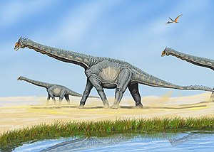Sauropoda - Some sauropods, such as Alamosaurus sanjuanensis, formed herds segregated by age.