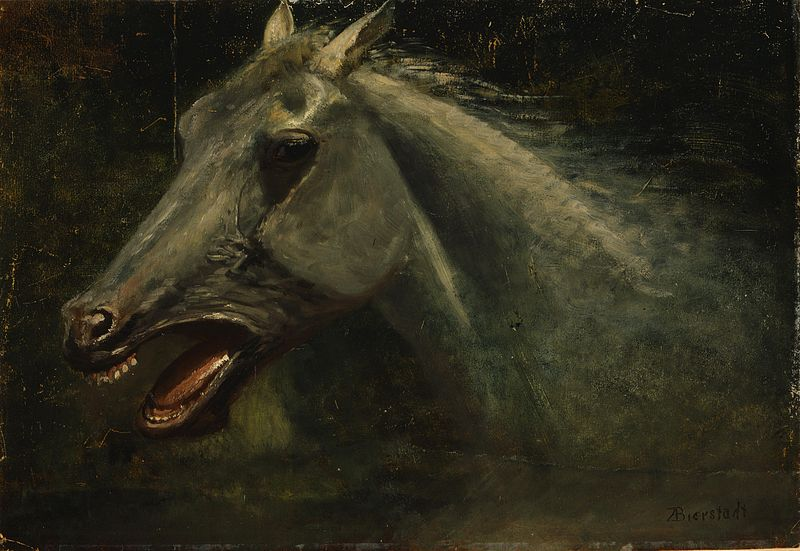 "File:Albert Bierstadt - A Wild Stallion (an original oil sketch for ""The Last of the Buffalo"").jpg"