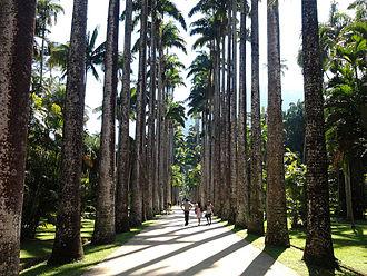 Jardim Botânico, Rio de Janeiro - Rio de Janeiro Botanical Garden