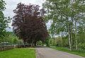 Allee im Park Echternach 01.jpg