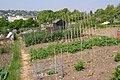 Allotment Gardens Lyme Regis - geograph.org.uk - 410096.jpg