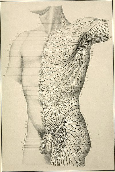 File:American practice of surgery; a complete system of the science and art of surgery (1906) (14584335740).jpg