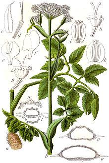атлас-визначник рослин читати