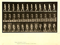 Animal locomotion. Plate 24 (Boston Public Library).jpg