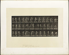 Animal locomotion. Plate 402 (Boston Public Library).jpg
