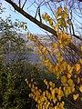 Ankara - panoramio (6).jpg