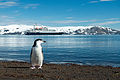 Antarctica 2013 Journey to the Crystal Desert (8370601512).jpg