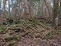 Aokigahara Forest (10863133755).jpg
