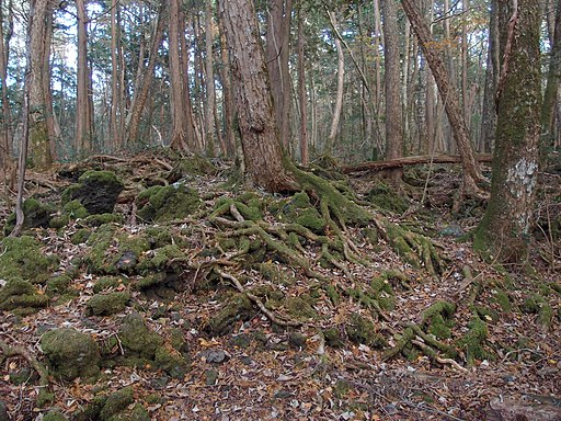 Aokigahara Forest (10863133755)