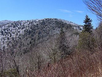 Old Black (Great Smoky Mountains) - The summit of Old Black, looking southwest from the Appalachian Trail