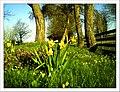 April Frühling Parc Natural Mundenhof Freiburg - Master Botany Photography 2013 - panoramio.jpg