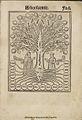 Arbor scientie ... Raymundi Iullii 1515 d1.jpg