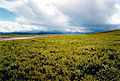 Arctic Tundra (8540635536).jpg