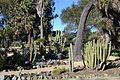 Arizona Cactus Garden at Stanford University 1.JPG