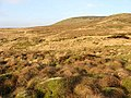 Arkleton Hill - geograph.org.uk - 636303.jpg