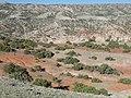 Astragalus oreganus (7161231887).jpg