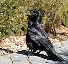 Raven head milf takes it both ways