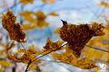Autumn (5131878804).jpg