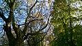 Autumn in Whitworth Park - panoramio (1).jpg