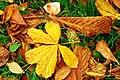 Autumn leaves, Lisburn - geograph.org.uk - 1517694.jpg