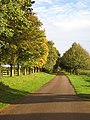 Autumnal avenue - geograph.org.uk - 1023142.jpg