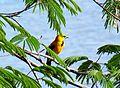 Aves en Ciudad Guayana.JPG