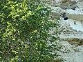 BG Aladzha monastery 30.jpg