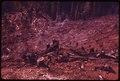BUFFER STRIP BURNING IN A SLASH BURN IN OLYMPIC NATIONAL TIMBERLAND, WASHINGTON. NEAR OLYMPIC NATIONAL PARK - NARA - 555162.tif