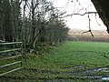 Balbridie Plantation - geograph.org.uk - 287554.jpg