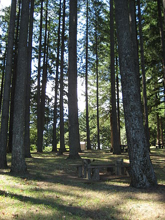 Bald Peak State Scenic Viewpoint - Forested section of the park.