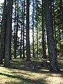 Bald Peak forest.JPG