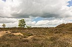 Balloërveld, natuurgebied in Drenthe 27.jpg
