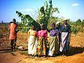 Banana planted on Arborloo pit (5566954787).jpg