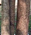 Bark I IMG 2073.jpg