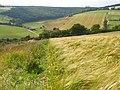 Barley, Upwaltham - geograph.org.uk - 893340.jpg