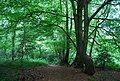 Barnett's Wood - geograph.org.uk - 1366719.jpg