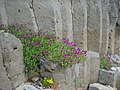Basalt columns above Coubon, with flowers.JPG