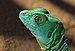 Basilic Vert.jpg