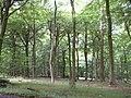 Beechwood - geograph.org.uk - 38840.jpg