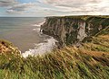 Bempton cliffs - geograph.org.uk - 1474478.jpg