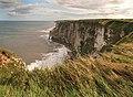 Bempton cliffs - geograph.org.uk - 1474478.jpg