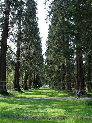 Benmore Botanic Garden - Image: Benmore Botanic Garden (475864726)