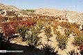 Berberis 13960722 12.jpg
